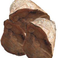 월넛(Walnut)